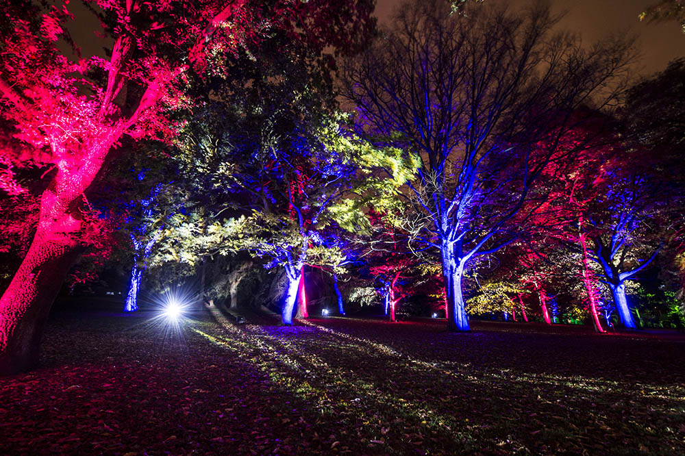Botanic Lights