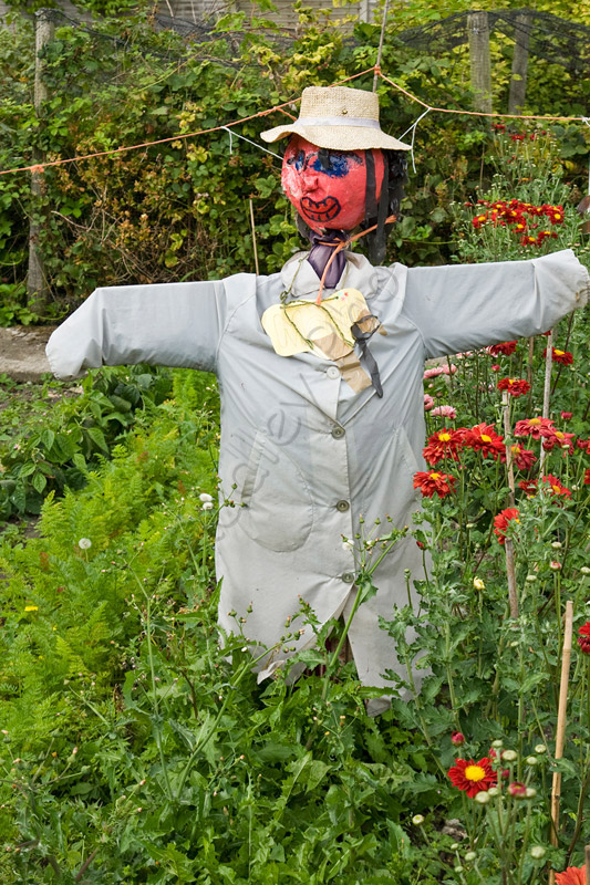 Scary Scarecrow in Field