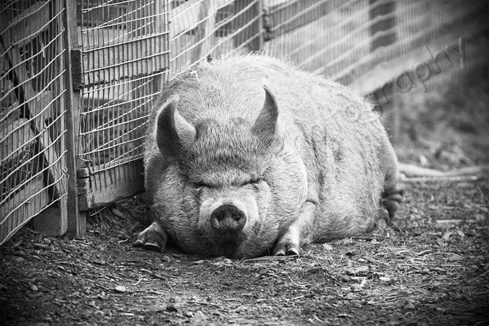 edinburgh zoo first time visit chris radley photography