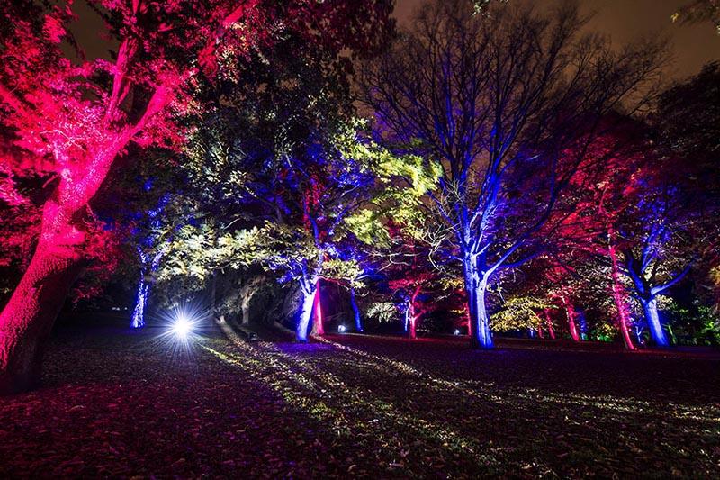 Botanic Lights Royal Botanic Gardens Edinburgh